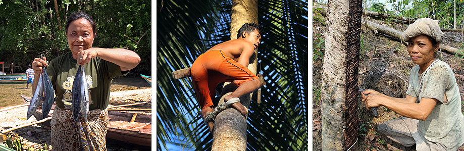 Farming of coconuts and rubber and fishing are the main sources of income on Nias Island.