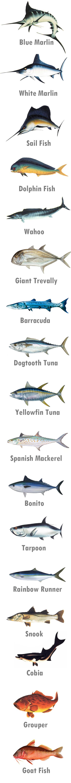 Nias Island Game Fish