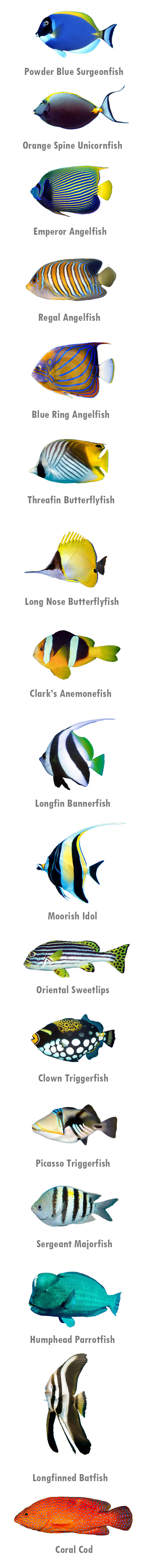 Nias Island Reef Fishes