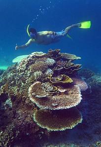 Snorkelling at Luluang Beach, Telos. Photo courtesy of Telloku.